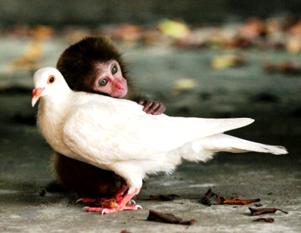 Animal Love...India