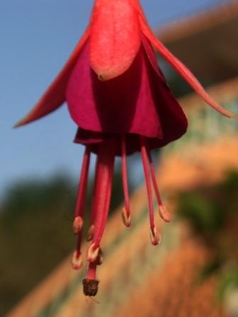 Vidya Niwas, Flowers Dharamsala