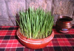 Green Dussehra