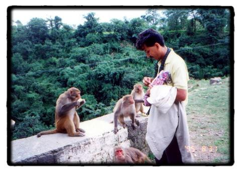 Arvind with Hungry monkeys