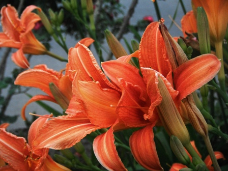 Flora India
