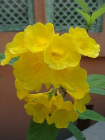 Spring India