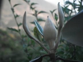 Flora and Fauna India