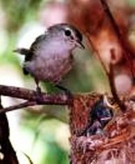 Alpine Birds, Dharamsala
