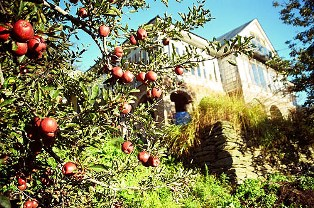 Apple Orchards of Himachal