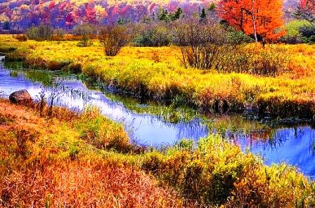 Autumn India