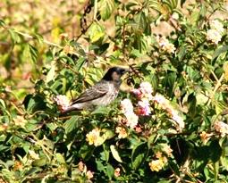 Medicinal Plants & Birds Himachal
