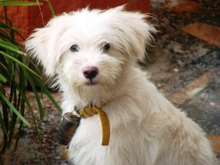 Dharamsala Hotel Pets