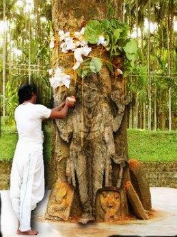 Bodhi Tree, Dharamsala 2010