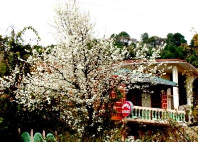 Spring Flowers, Vidya Niwas, India