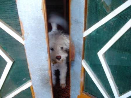 Bobo Dog Dharamsala