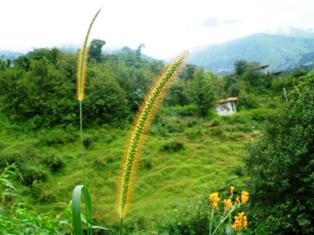 Dharamsala Green News