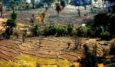 Green Eco-Himalayas, Dharamsala