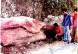 Himalayan Fossil