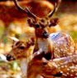 Himalayan Wildlife Dharamsala