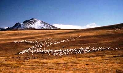 Tibetan Steppe Grassland