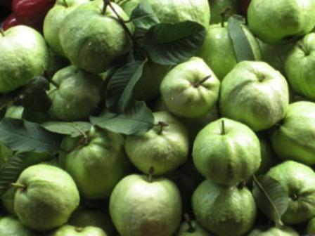 Guava India