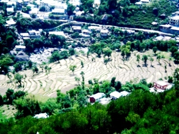 Green terrace of Dharamsala