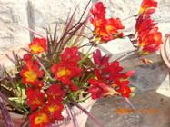 Spring Holi Flowers