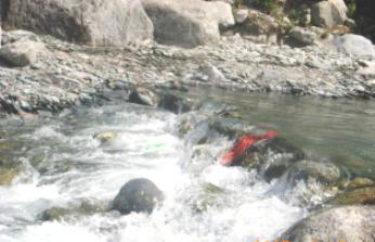 Manjhi River of Shiva, Dharamsala