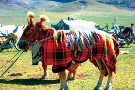 Tibetan Horse Race