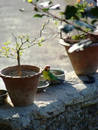 Birds of North India