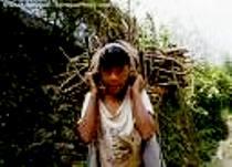 Think Green in Himachal Pradesh