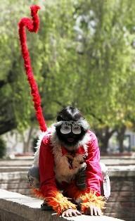 Monkey Man India