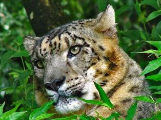 Renuka Leopard Park