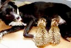 Animal Care Himalayas