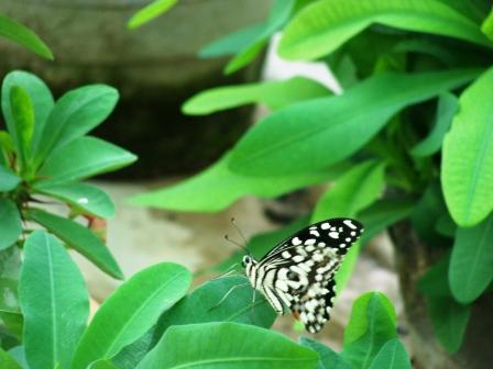 Nature Conservation, Dharamsala 2009