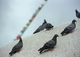 Birds Dharamsala