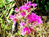 Pink Vidya Niwas