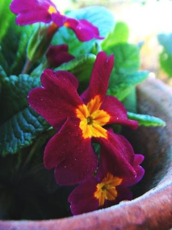 Flower Vidya Niwas, Dharamsala