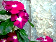 Vidya Niwas Flowers