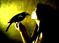 Himalayan Raven..A Friend