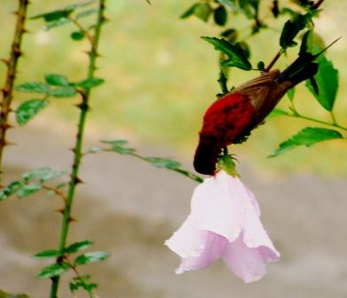 Red Nectar 2009