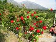 Roses Vidya Niwas, Dharamsala
