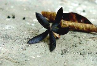 Seed Dharamsala