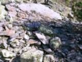 Slate Quarry of Dharamsala