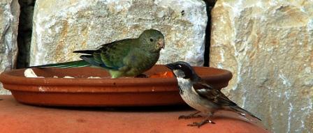 Birds of Dharamsala