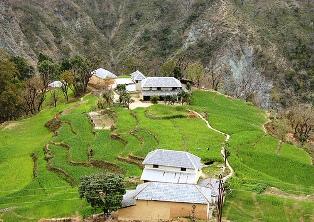 Dharamsala Farms