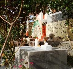 Vidya Niwas Shiva Temple