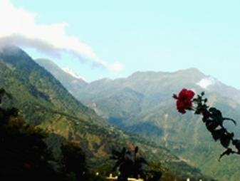 Vidya Views from Garden 2009