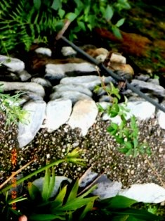 Green traditions of Vidya Niwas