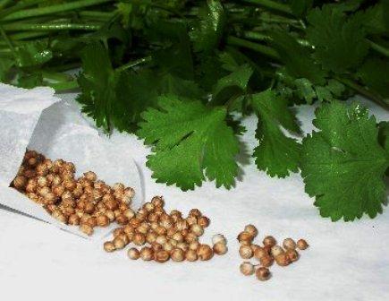 Herbs India