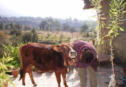 Volunteering Dharamsala