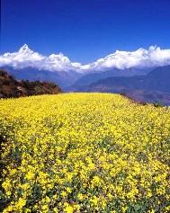 Basant Himalaya