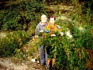 Heal Green Friends in Dharamsala