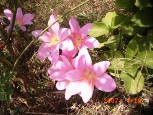 Pink Monsoon Vidya Niwas
